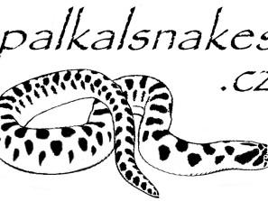 palkalsnakes.cz na štítky